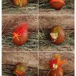 Pirhi in ostala jajca