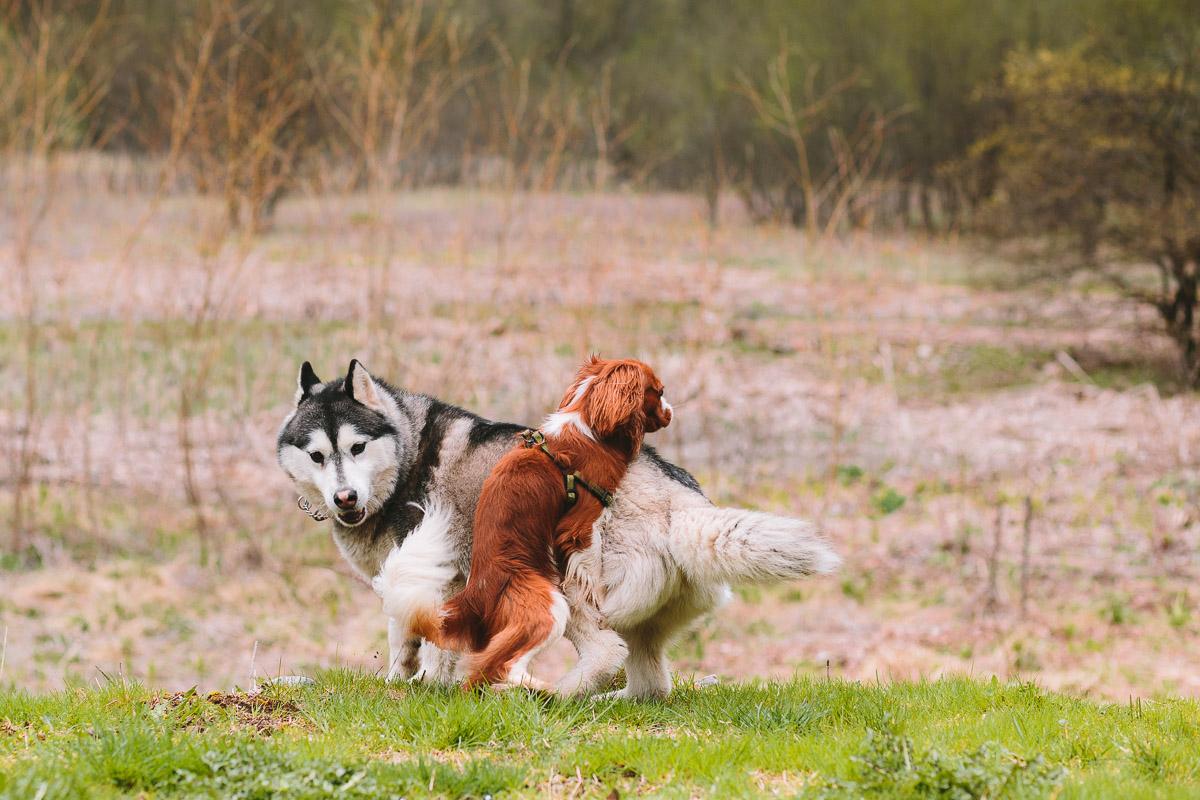 pasja_fotografija-dog_photography-003